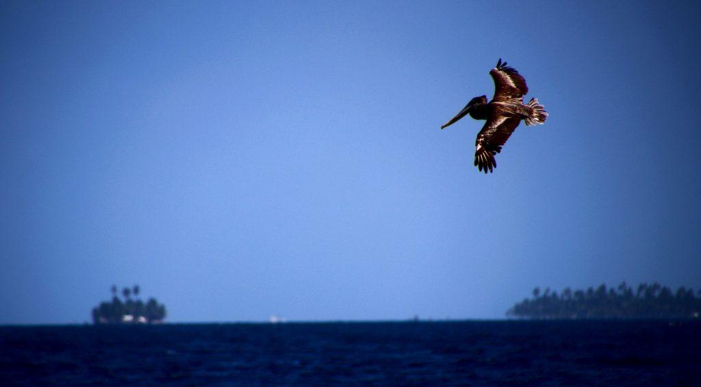 ©Guillaume Baviere,San Blas. Sur l'Isla Aguja. Flickr