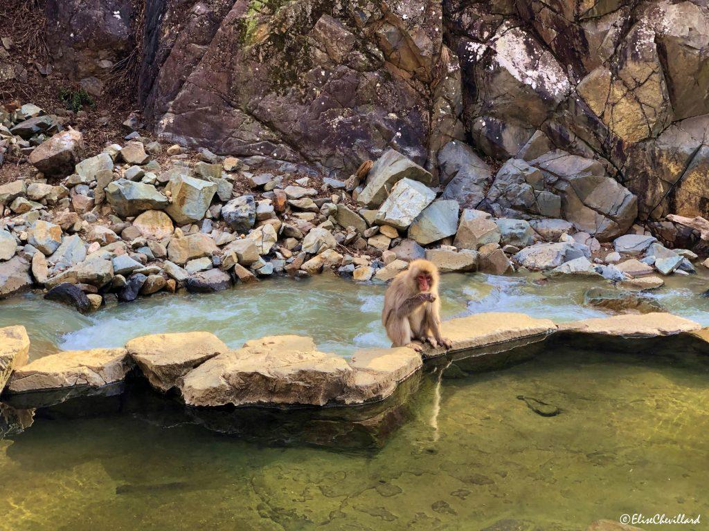 Province de Nagano, Snow Monkey Park